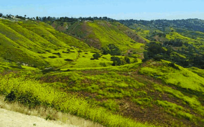 After the Rains – Celebrating Native Plants and Their Purpose on the Peninsula