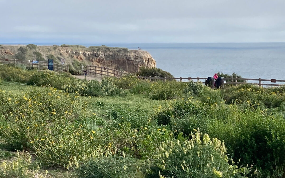 Grant Provides Capstone Funding for Abalone Cove